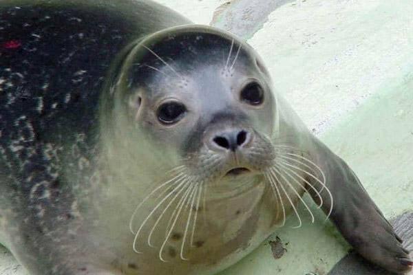 La foca monaca nel golfo di orosei